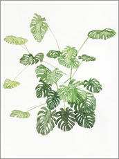 Wall sticker  Monstera - Jennifer McLennan
