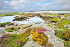 Gallery print  Ireland Landscape with wild flowers