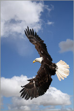 Gallery print  Freedom on eagle wings