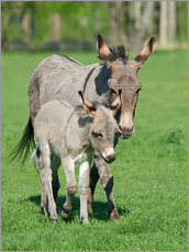 Wall sticker  Donkey mum and her little baby