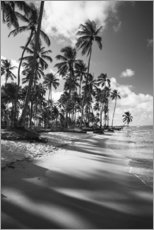 Wall sticker  Tropical palm trees on a Brazilian beach in black and white - Alex Saberi