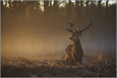 Gallery print  Stag in Autumn Sunrise - Alex Saberi