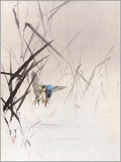 Gallery print  Bird catches fish - Watanabe Seitei