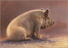 Gallery print  Pig in the wallow