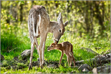 Canvas print  Mother and foal - Art Couture