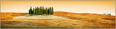 Acrylic print  Cypress trees in Tuscany - Art Couture