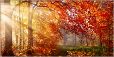 Canvas print  Forest in Autumn - Art Couture