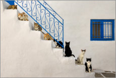 Canvas print  Cats on stairs in Greece - Katho Menden