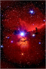 Wall sticker  Horsehead Nebula in the constellation Orion - MonarchC