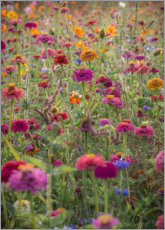 Premium poster The colorful wild flowers of France