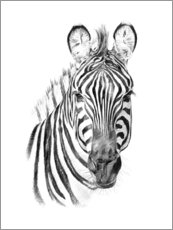 Foam board print  Zebra Sketch