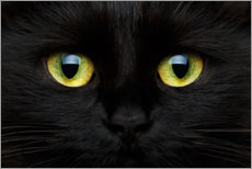 Canvas print  Cat's Eye