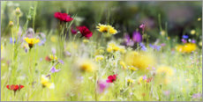 Premium poster  Wildflower meadow in bloom - Lichtspielart