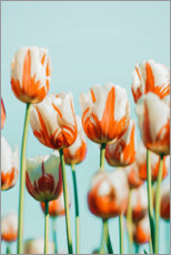 Premium poster Moored tulips on a light blue