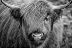 Canvas print  Highlander - Scottish Highland Cattle black and white - Martina Cross