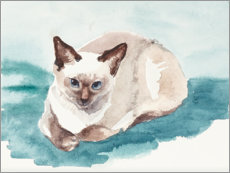 Premium poster Pretty siamese cat