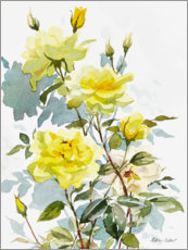 Premium poster Yellow roses, watercolor