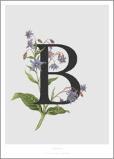 Premium poster B is for Borage
