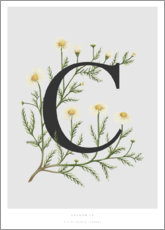 Premium poster C is for Chamomile