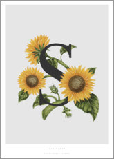 Premium poster  S is for Sunflower - Charlotte Day