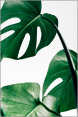 Premium poster  Monstera - Art Couture