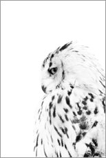 Acrylic print  Snow owl - Art Couture