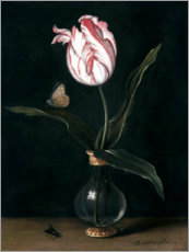 Acrylic print  The 'summer beautiful' tulip - Balthasar van der Ast