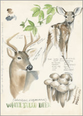 Aluminium print  Whitetailed deer & forest mushrooms - Jennifer Parker