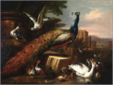 Canvas print  A peacock surrounded by doves, hens and aquatic birds - Pieter Casteels III