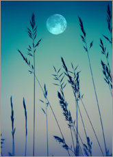 Acrylic print  Full moon over the grasses