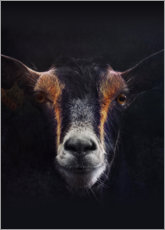 Canvas print  Goat Portrait