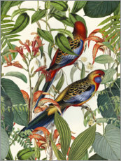 Wall sticker  Tropical Birds - Andrea Haase