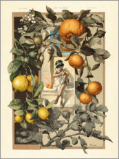 Acrylic print  Lemon and Orange Plant - Anton Seder