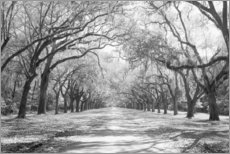 Acrylic print  Oak Avenue in Wormsloe, USA