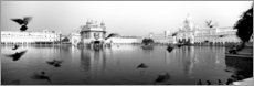 Foam board print  Golden Temple in Punjab, India