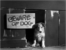Acrylic print  Beware of dog