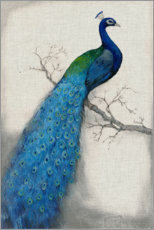 Acrylic print  Peacock Blue I - Tim O'Toole