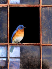 Premium poster  Bluebird at the window - Chris Vest