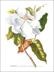 Foam board print  Magnificent Magnolias I - Jacob Trew