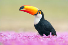 Premium poster  Toucan in the sea of flowers