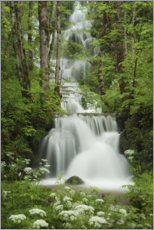 Acrylic print  Waterfall in the forest, France - Tobias Richter