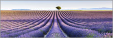 Canvas print  Lavender field in Provence - Matteo Colombo