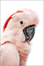 Canvas print  Pink Cockatoo - Art Couture