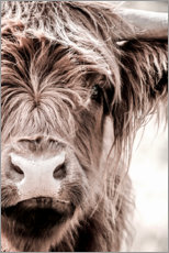 Gallery print  Scottish beef - Art Couture