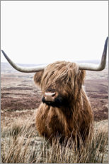 Canvas print  Brown Highland Cattle - Art Couture