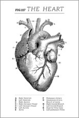 Aluminium print  Vintage heart chart - Wunderkammer Collection