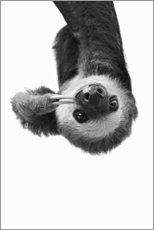 Aluminium print  Hang Out - Sloth - Sisi And Seb
