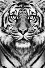 Canvas print  Majestic Tiger - Sisi And Seb