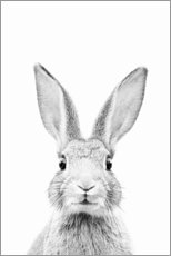 Aluminium print  Curious Rabbit - Sisi And Seb