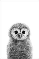 Acrylic print  Young owl - Art Couture